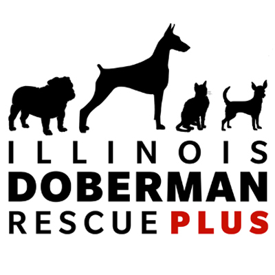 Illinois Doberman Rescue Plus