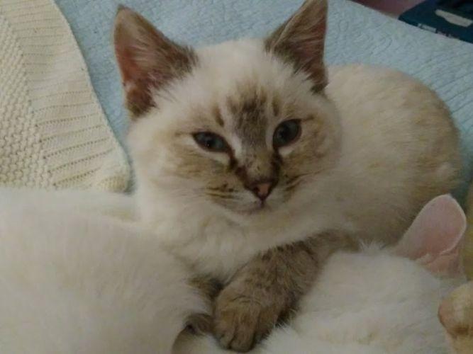 Divapets Cat Rescue