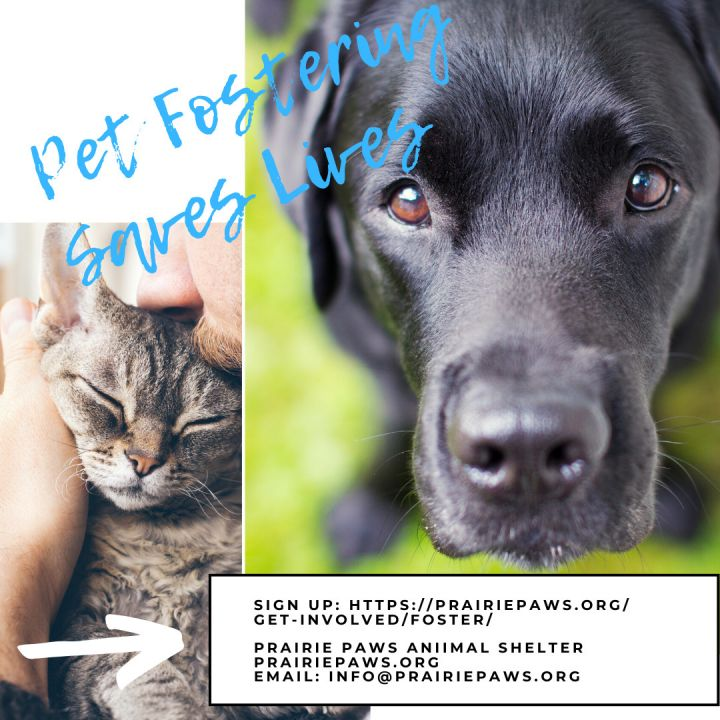 Pet Fostering Saves Lives!