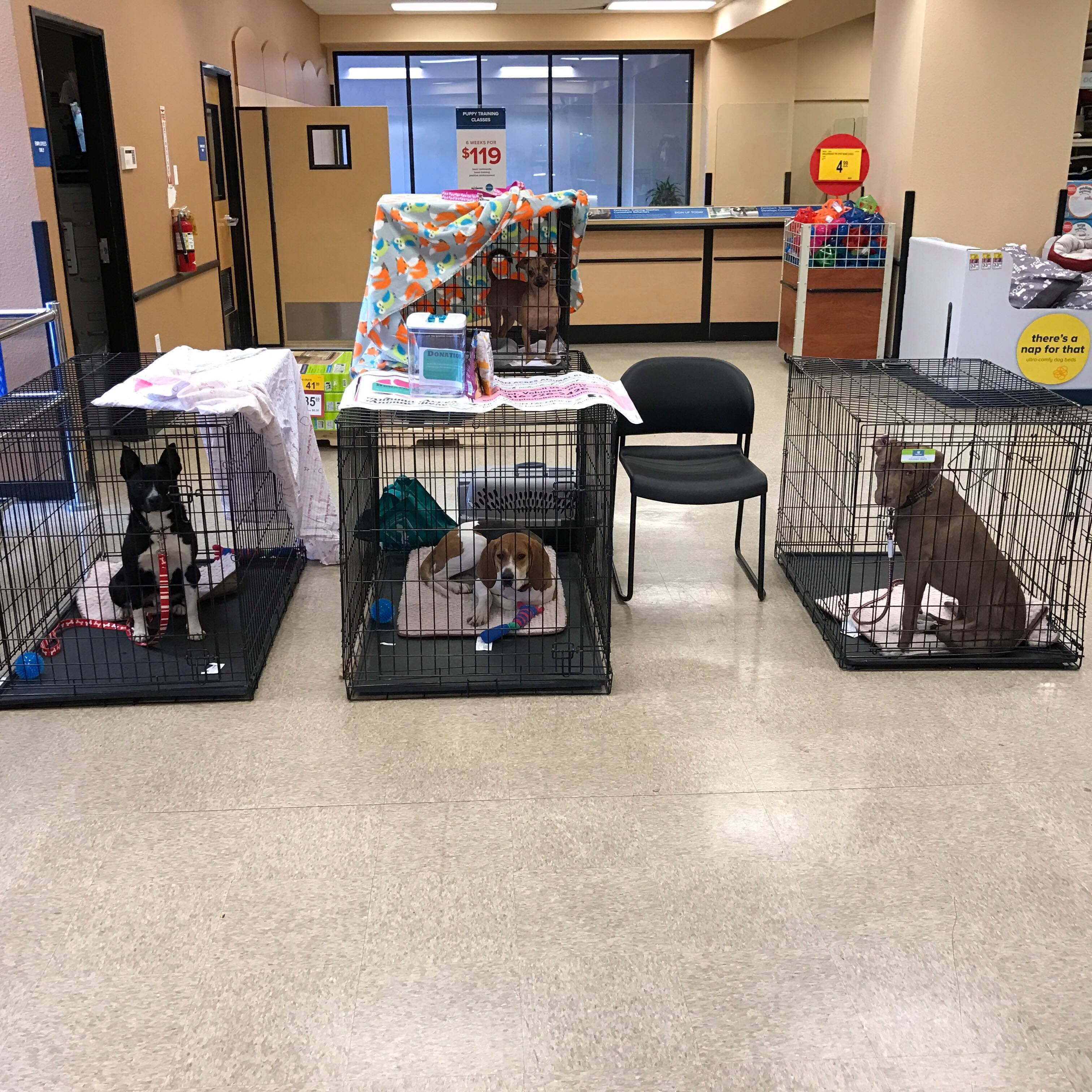 Ward Parkway Petsmart adoption events!