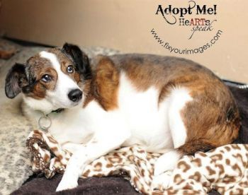 Faith is a special needs girl looking for a home.