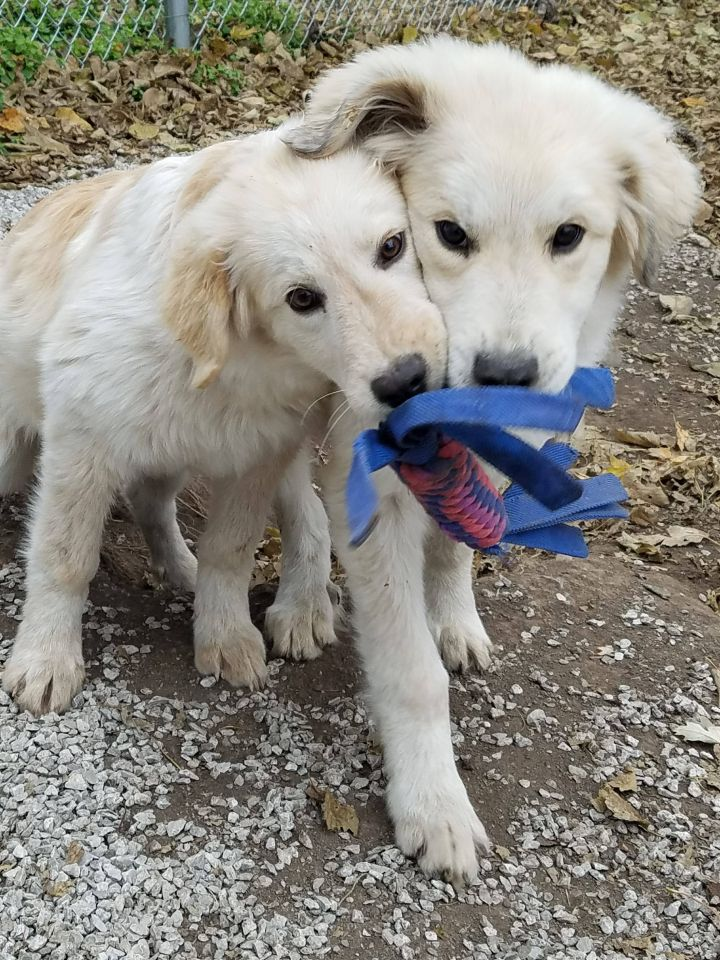2 adorable pups that have been adopted!