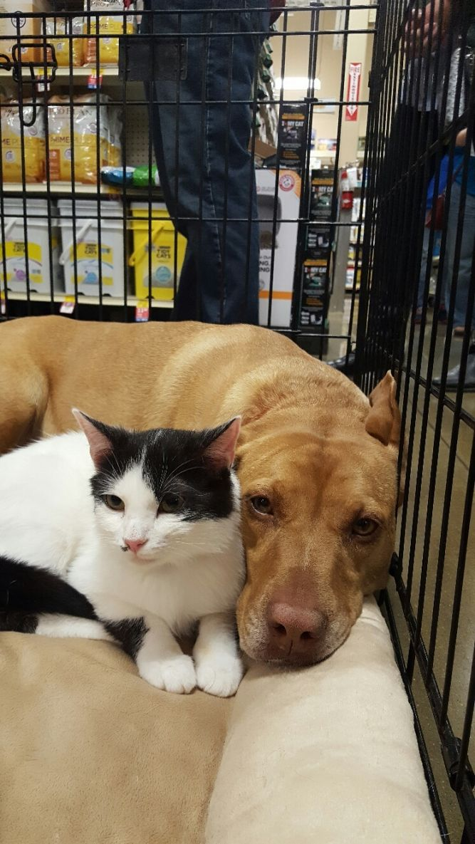 Friends of Powell Co.'s Pets & County Shelter