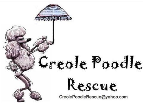Creole Poodle Club Rescue