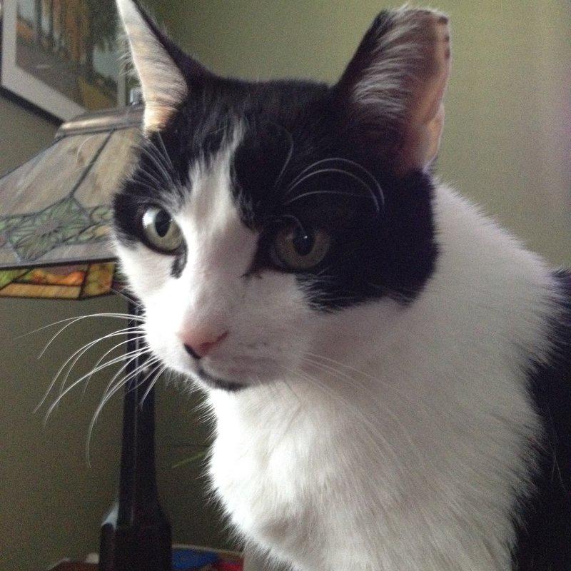 Angel adopted-sweet companion kitty!