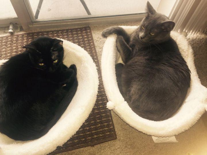 Adopted together - Raven & Ash buddies forever!