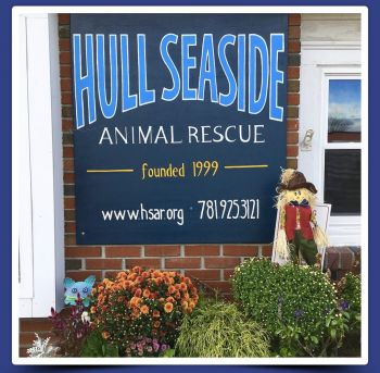 Welcome to Hull Seaside Animal Rescue