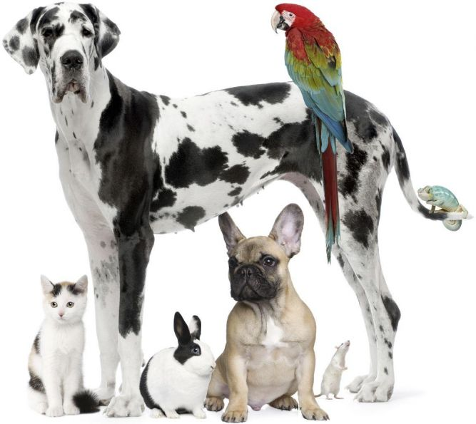 Chippewa County Animal Control Shelter
