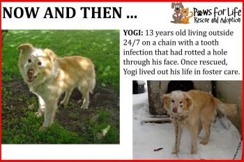 Before and After of Yogi