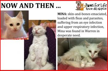 Before and After of Mina