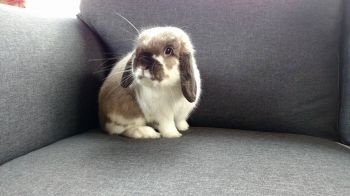 One of the many rabbits adopted we have rescued.