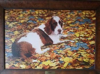 Duke, our shelter's namesake.