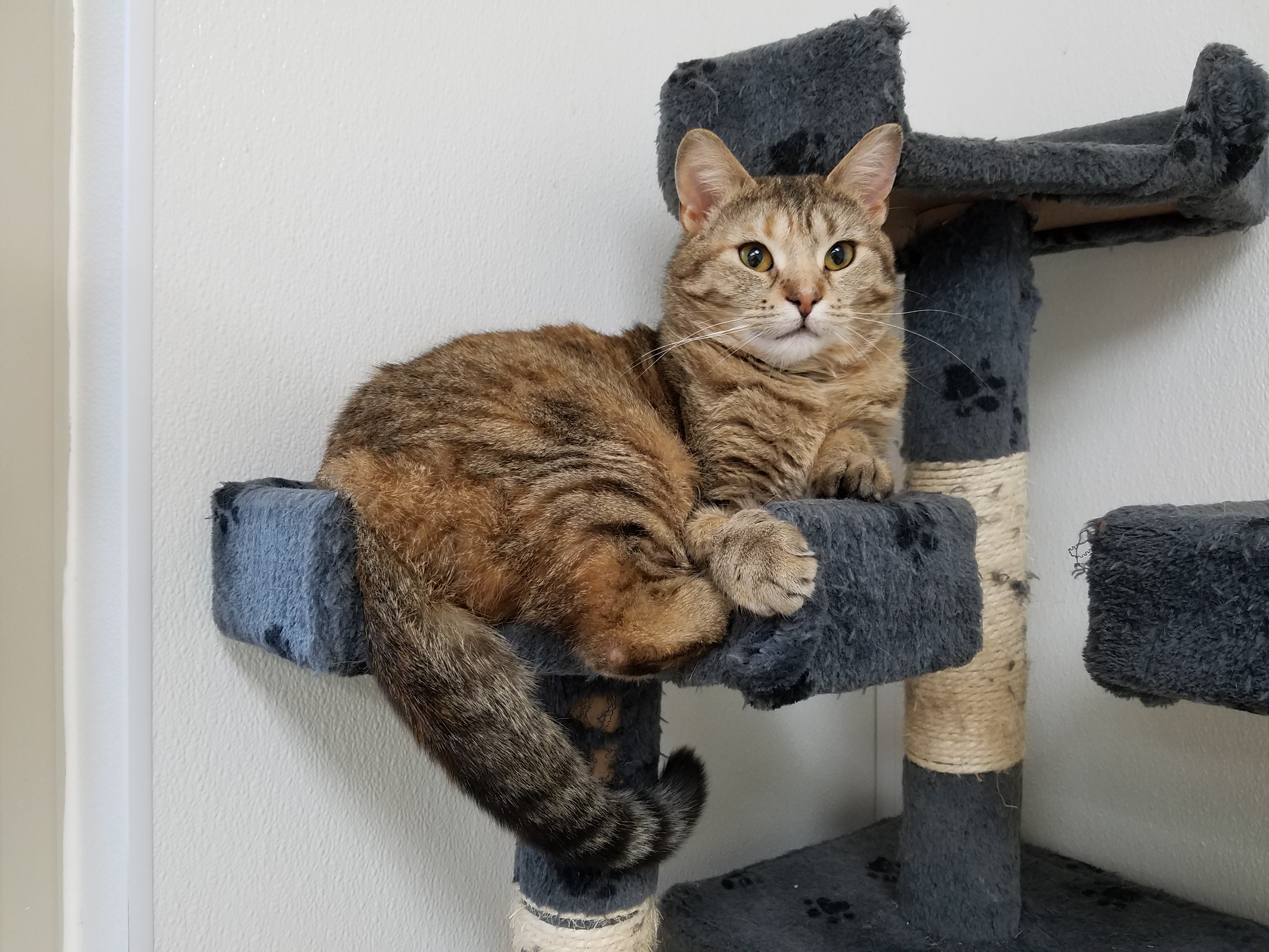 Catrina in a community cat room.