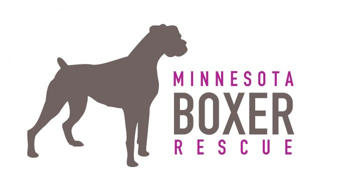 Pets For Adoption At Minnesota Boxer Rescue In Woodbury Mn Petfinder