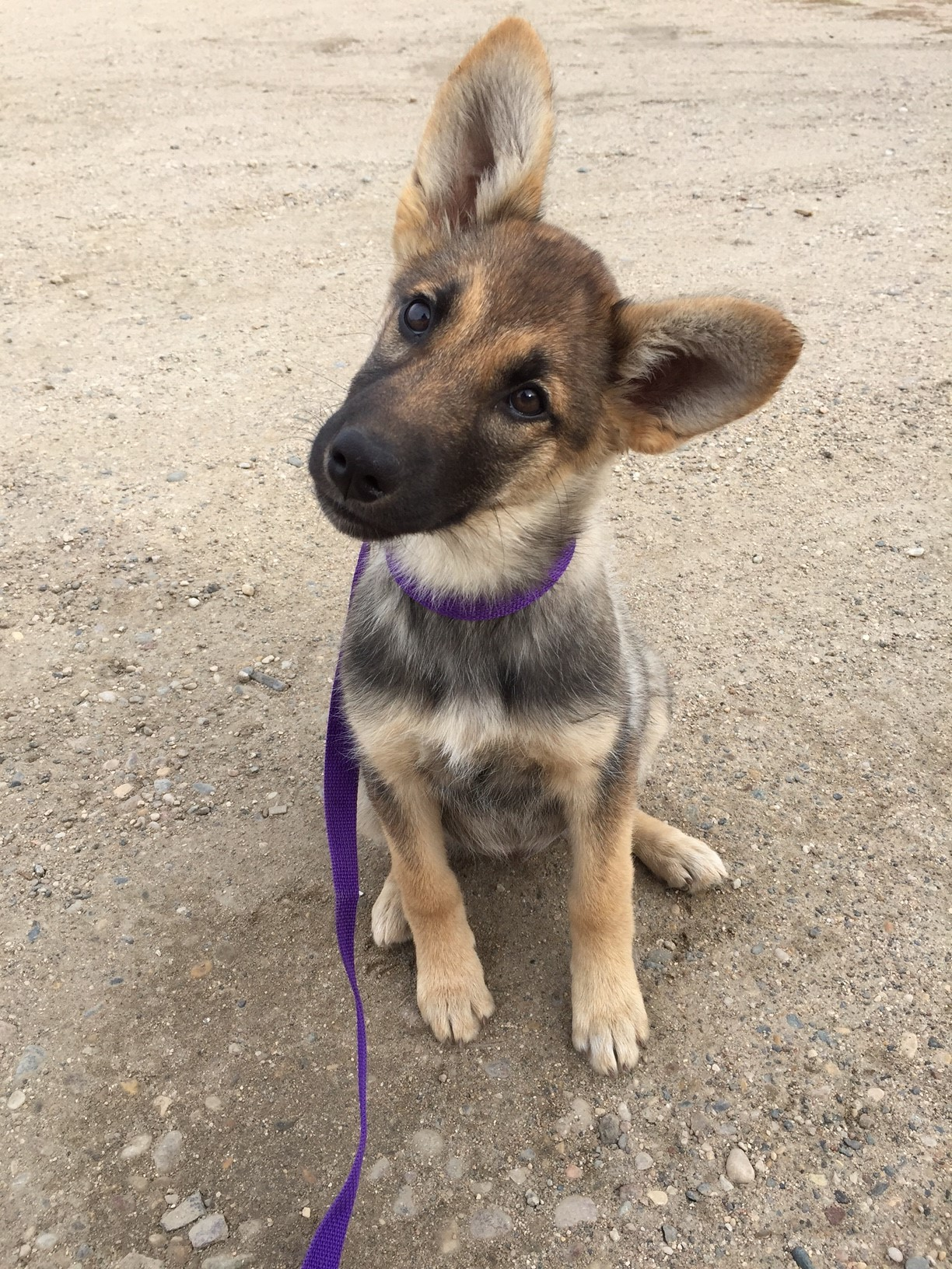 Pets For Adoption At Red Lake Rosie S Rescue In St Paul Mn Petfinder