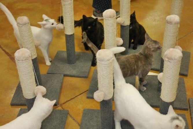 Mower County Humane Society