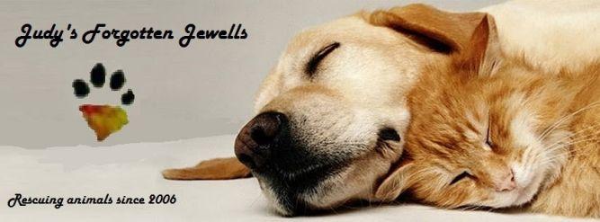 Judy's Forgotten Jewells