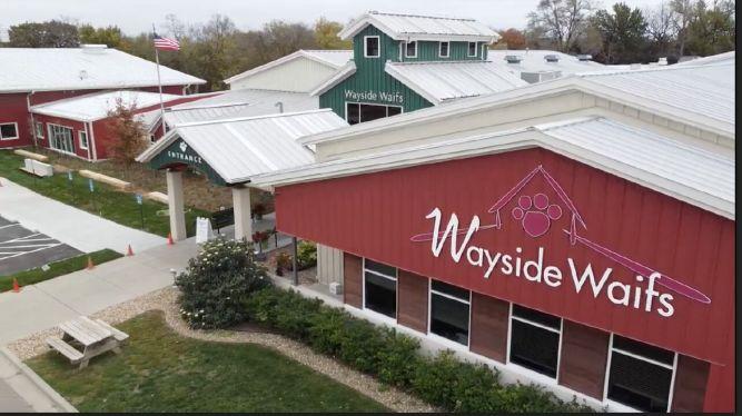 Wayside Waifs Animal Shelter