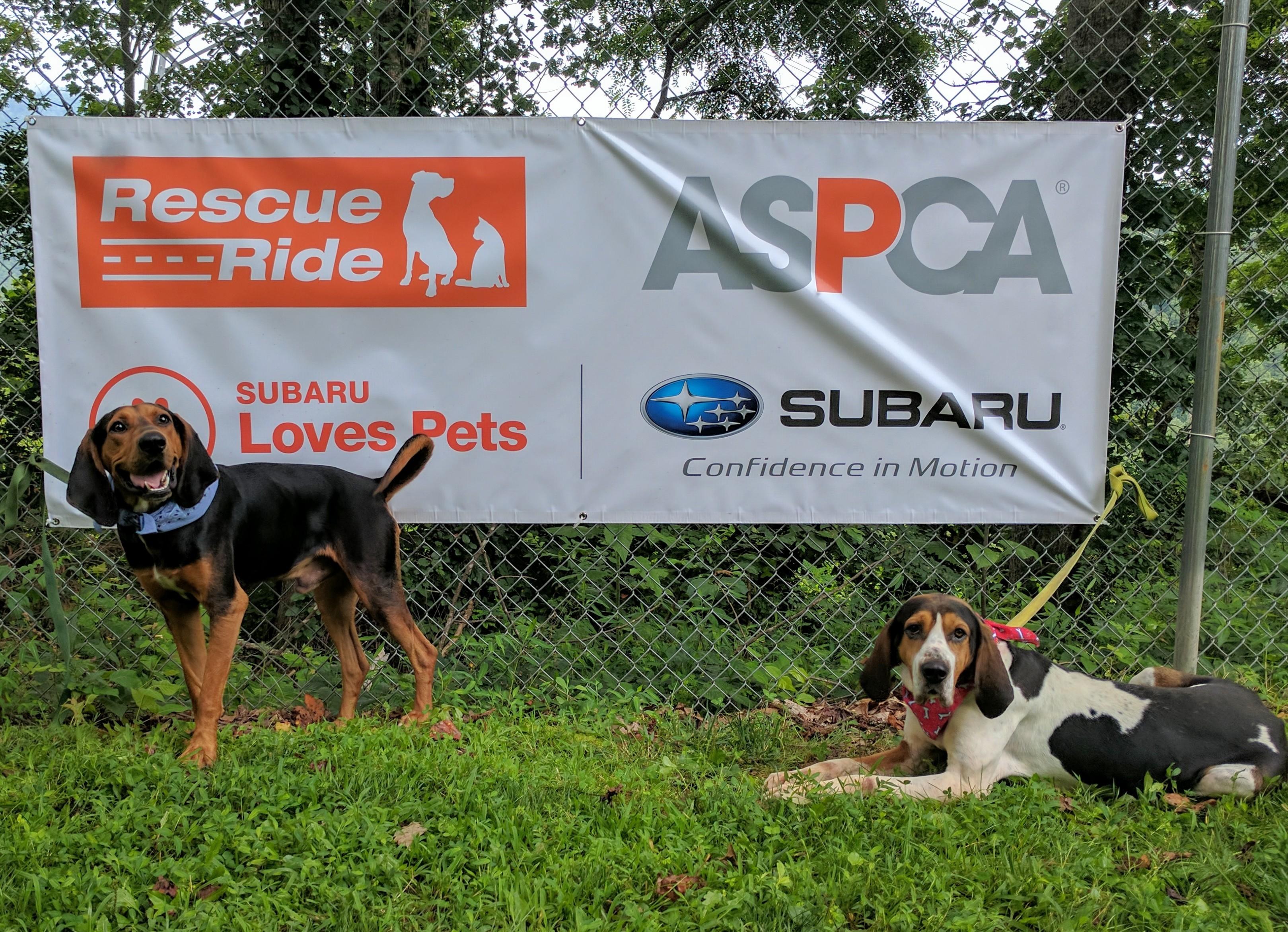 Thanks to ASPCA/Subaru Rescue Ride
