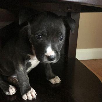 TAS puppy Rory!