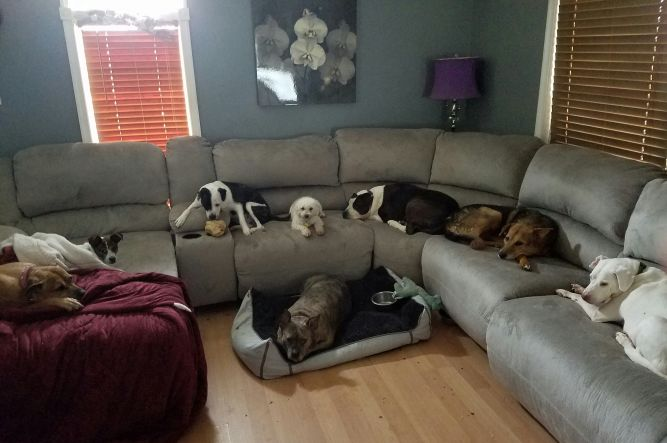 All Star Pet Rescue