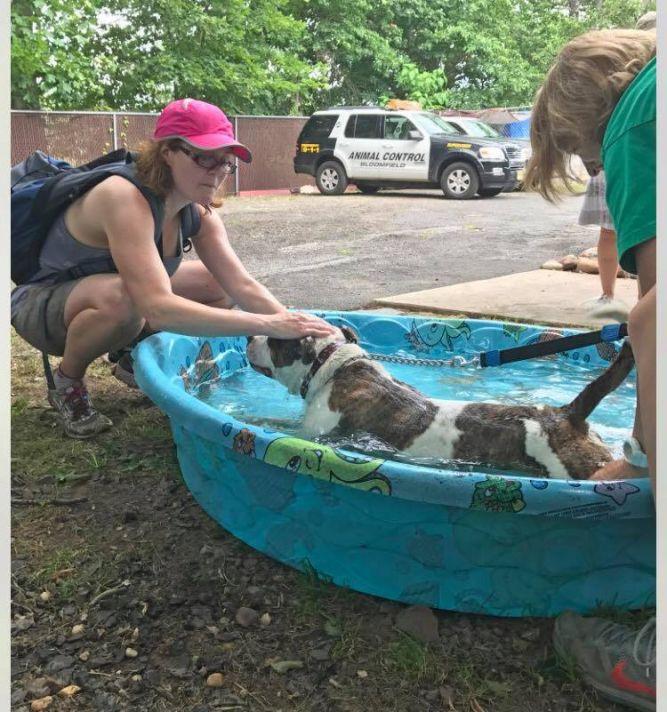 Bloomfield Animal Shelter  - John A. Bukowski Shelter for Animals