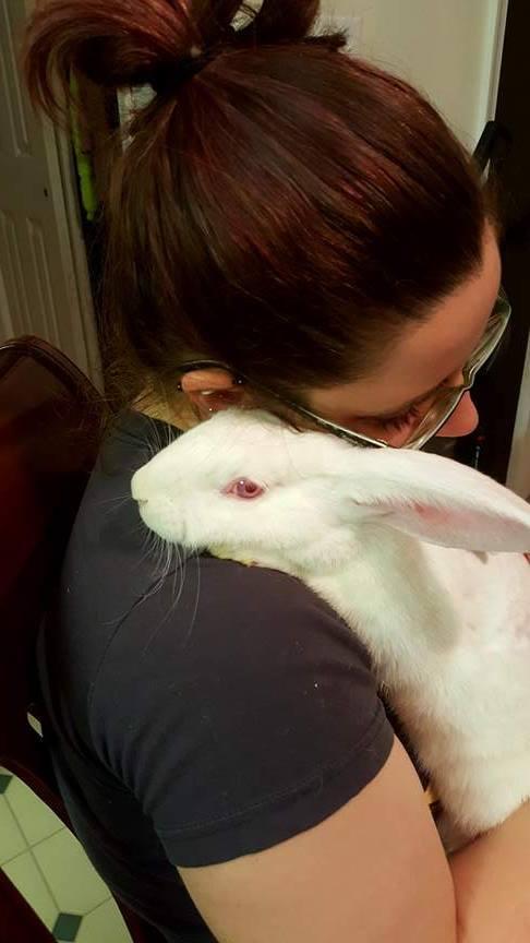 Ophelia, the gorgeous lab bunny.