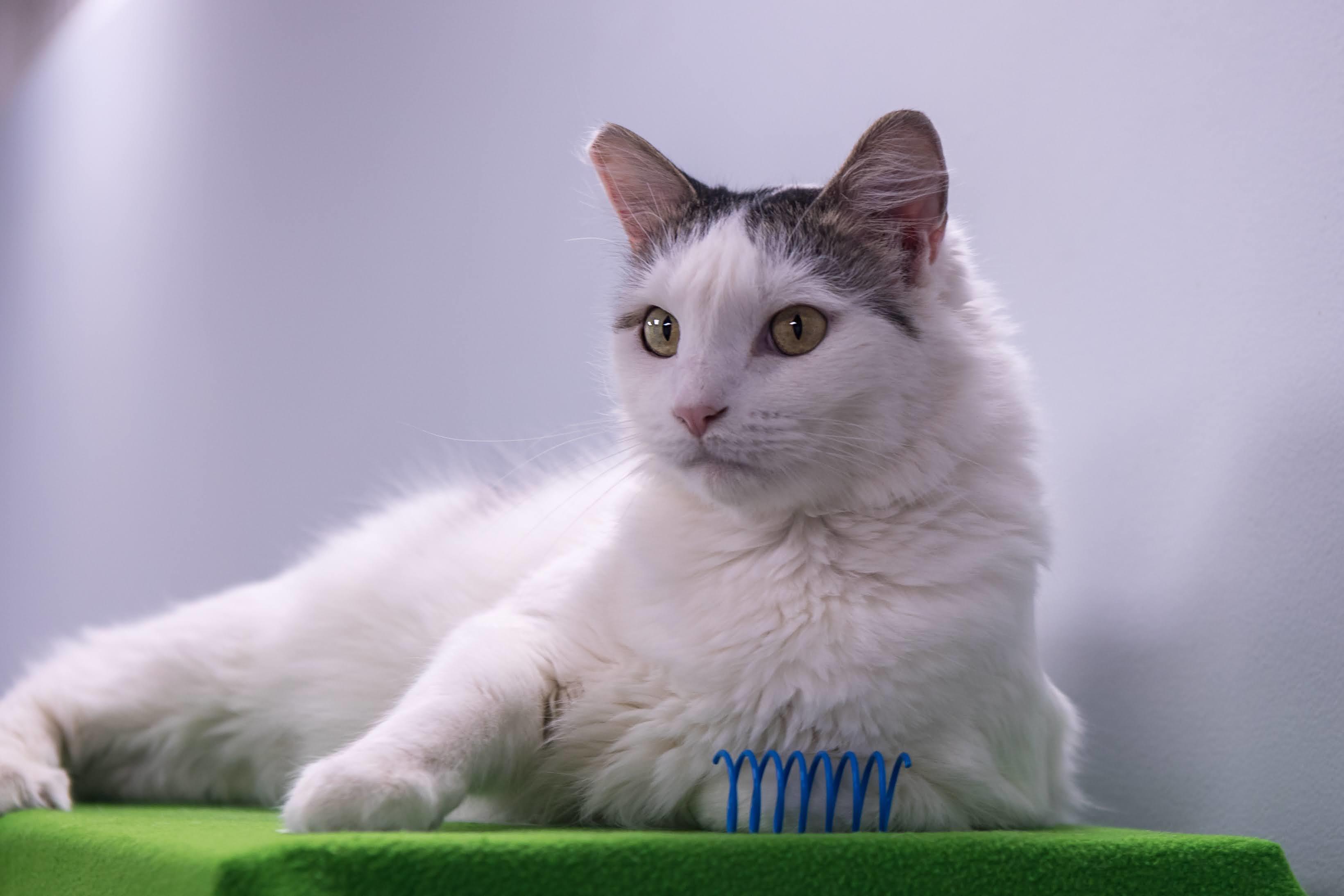 No-kill cat rescue