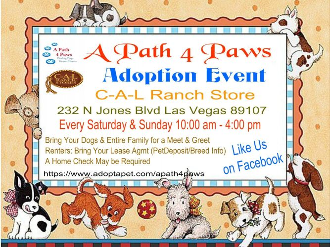 A Path 4 Paws Dog Rescue