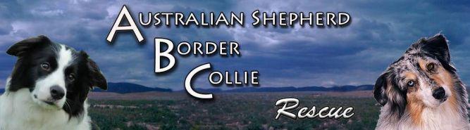 Aussie Border Collie Rescue of Northern Nevada