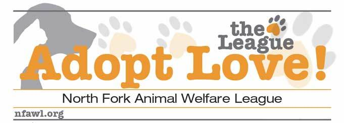 Pets For Adoption At The North Fork Animal Welfare League In