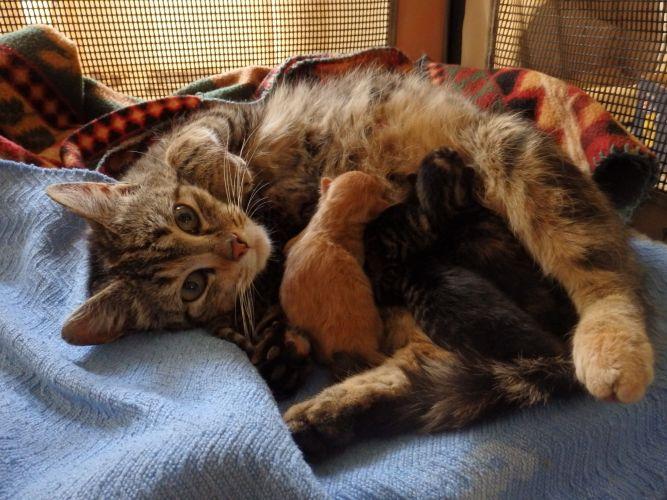 CNY Cat Coalition