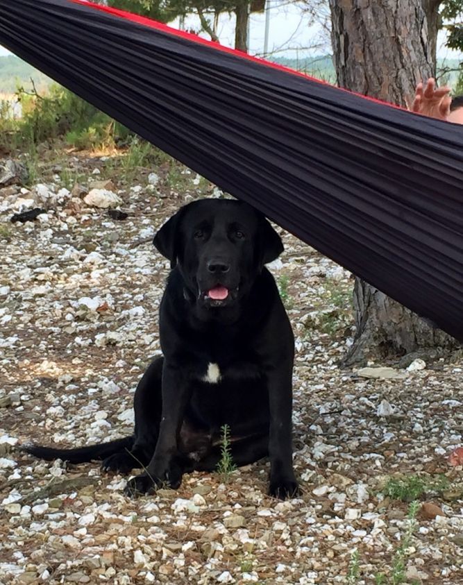 All About Labs Rescue Inc.