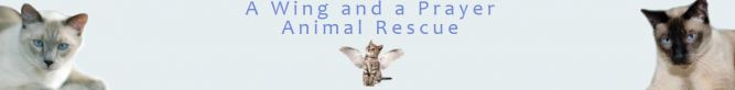 A Wing And A Prayer Animal Rescue