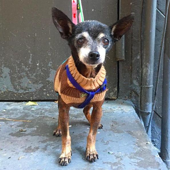 Social Tees Animal Rescue Foundation
