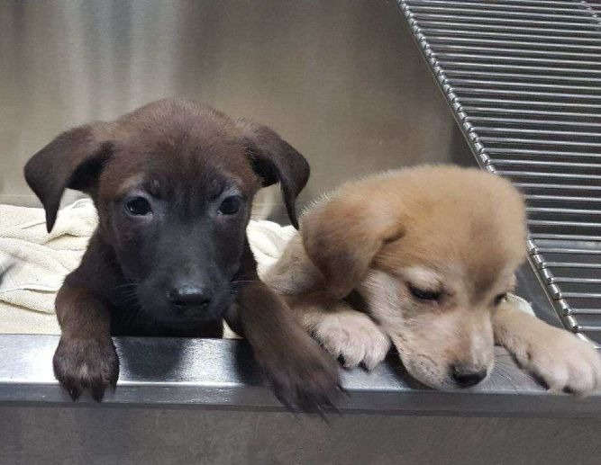 Angels In Waiting Rescue