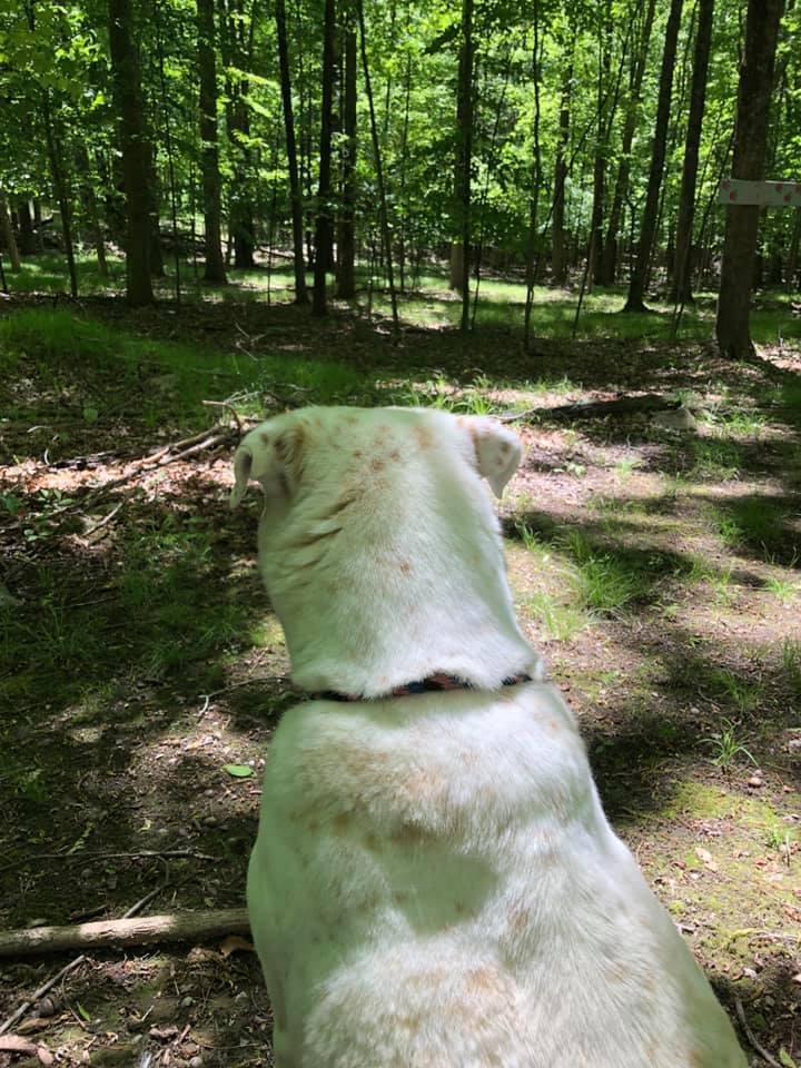 Wooded Dog Trails