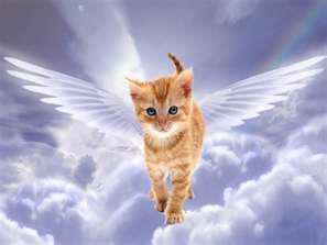 Kitten Angels
