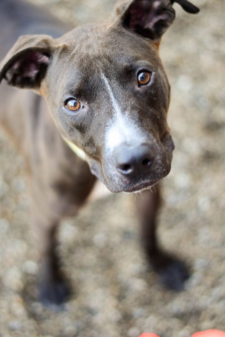 Pets For Adoption At Lucas County Canine Care Control In Toledo Oh Petfinder