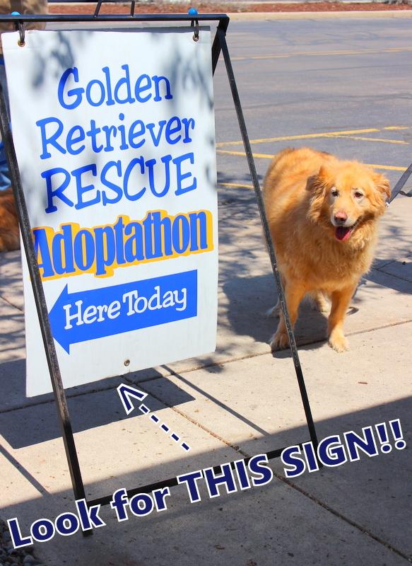 Golden Retriever Rescue Resource