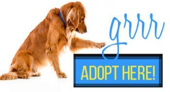 Become a golden angel sponsor www.gr-rescue.org