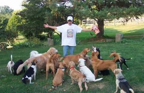 CAMELOT Puppy Sanctuary
