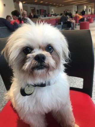 Pets For Adoption At Furever Shih Tzu Companion Dog Rescue Ohio In Parma Oh Petfinder