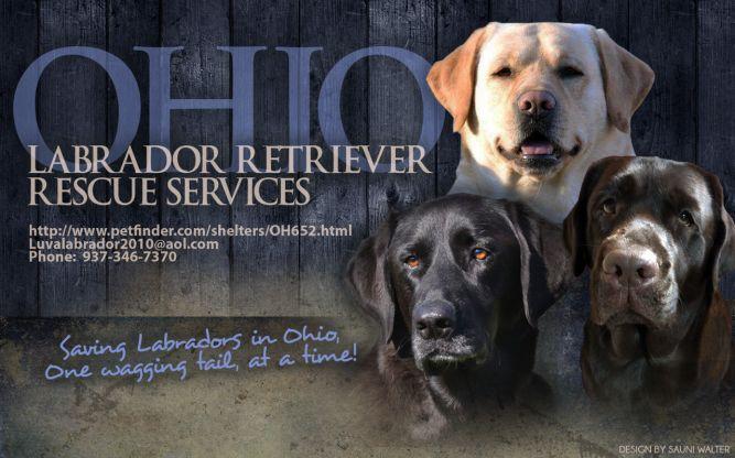 Ohio Labrador Retriever Rescue Services