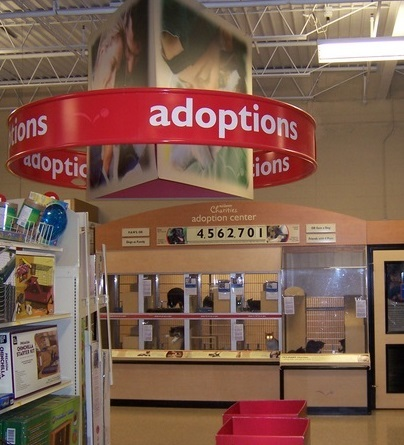 See our cats at PetSmart on NW Hwy & Rockwell