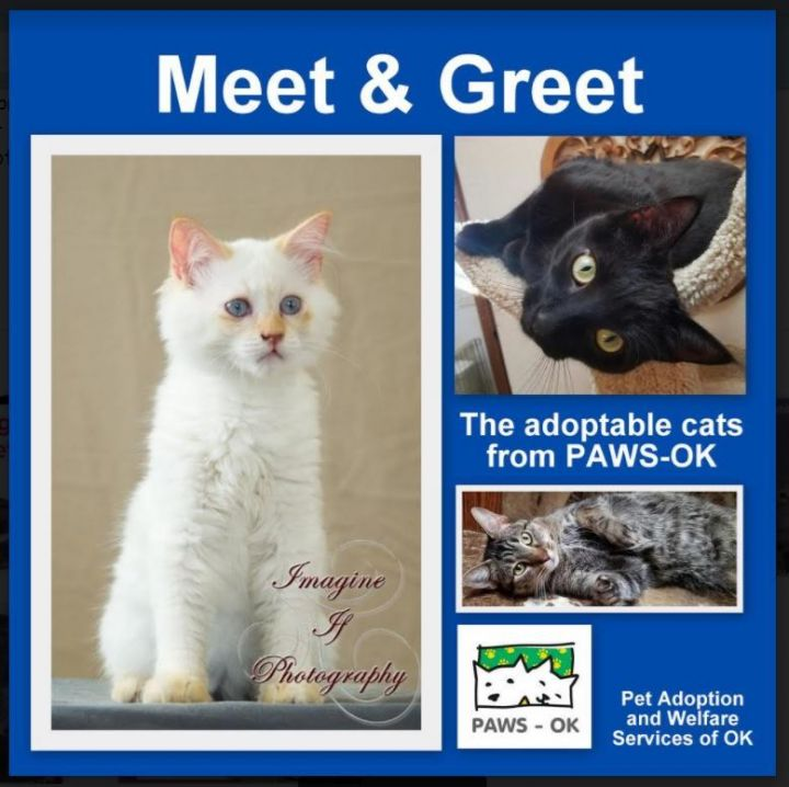 PAWS also holds special Meet & Greets at PetSmart