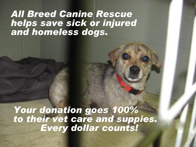 PLEASE HELP SAVE THEM!