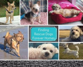 Some of our Adopted dogs
