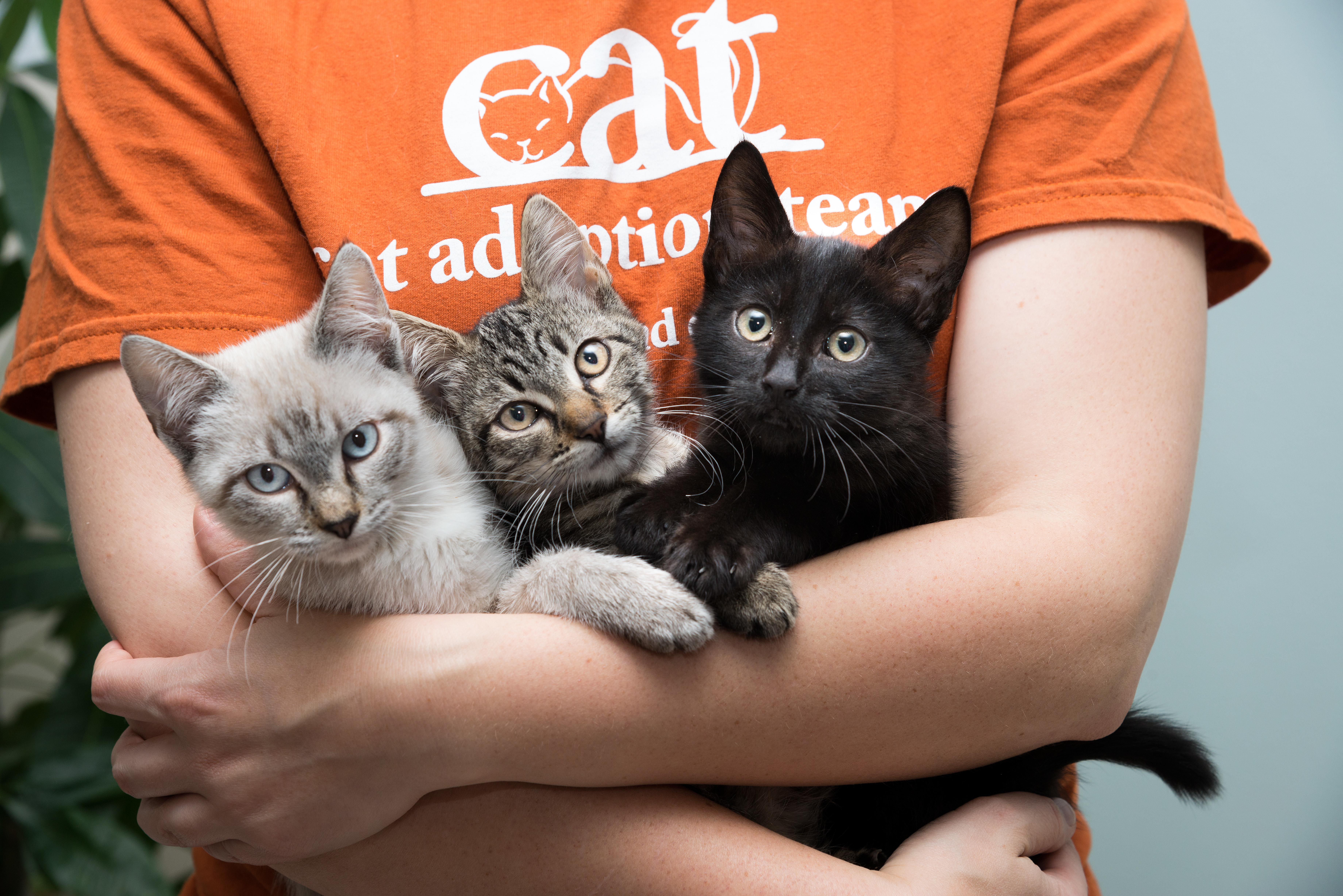 We find homes for 3,000+ cats & kittens annually