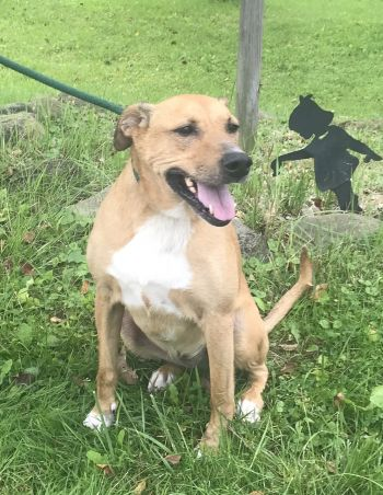 Harper is a young female adoptable dog!
